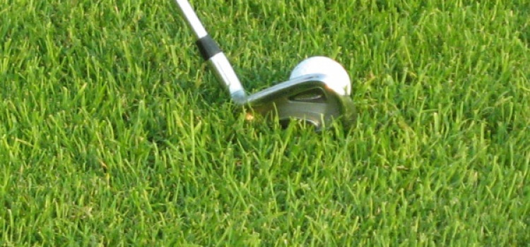 Na czym stoimy – rodzaje traw golfowych